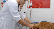 Hospital Veterinário Cria Banco de Sangue Animal